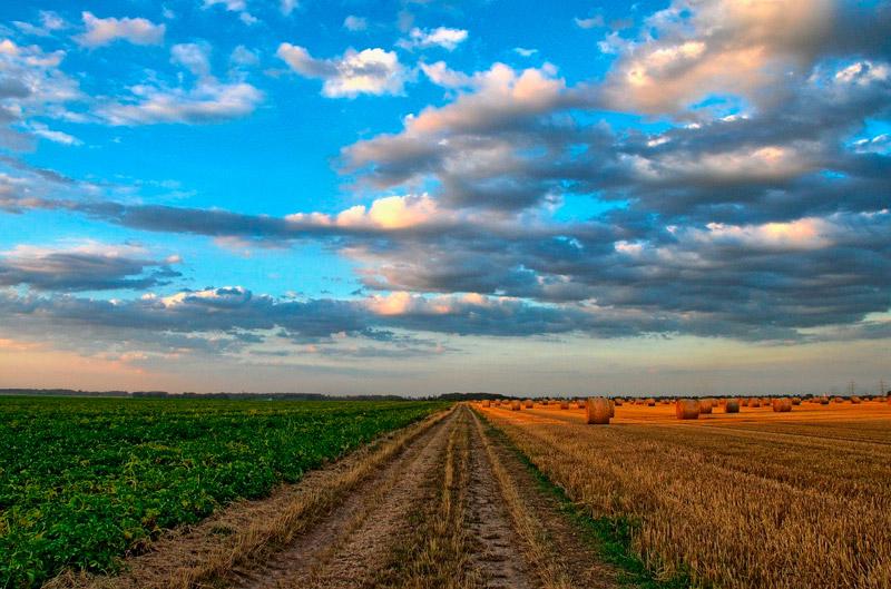 fp agraria